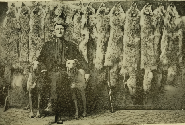A Canadian wolf hunter poses with his bounty (1909). Credit: Arthur Robert Harding/Wikimedia Commons