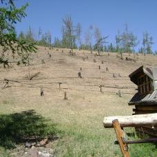 No comment. However, it was sad to see those stubs and the dried land. Near Mörön soum, Khövsgöl aimag.