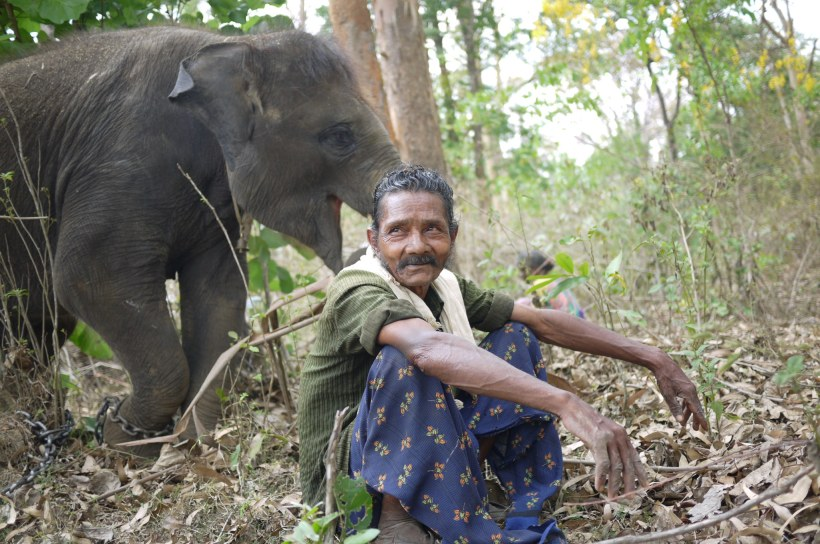 mahout with his orphaned elephant