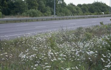 Chell_motorway