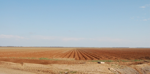 Bare cotton fields near the Macquarie River, NSW