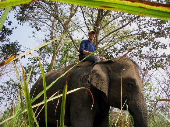 Anthropologist Piers Locke driving his elephant, Sitasma Kali. Photograph by Piers Locke.