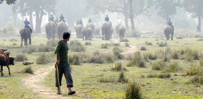 Chitwan elephants going to graze. Photograph by Piers Locke.