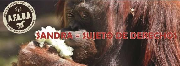 Sandra the Orangutan. Photograph: Asociación de Funcionarios y Abogados por el Derecho de los Animales.