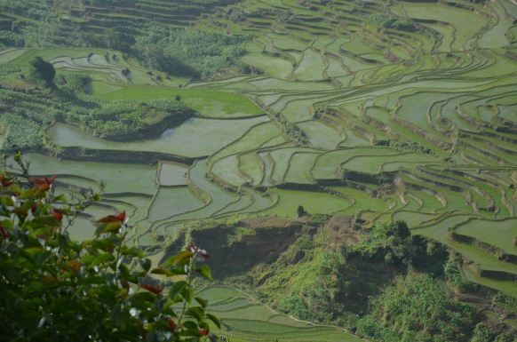 Honge Hani Rice Terraces, Yunnan, China. Photograph: Helmuth Trischler.