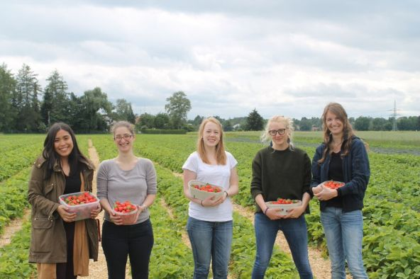 RCC Staff and Fellows Picking Strawberries at a Local Farm. Photograph: Valeria Berros.