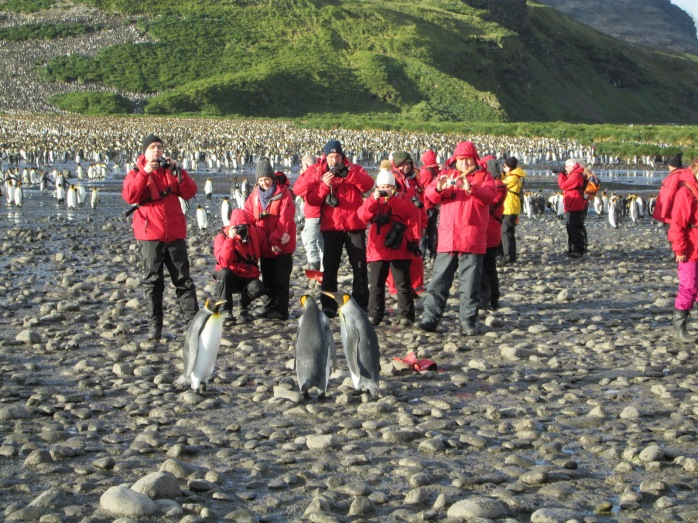 Expedition Cruise Tourism at Salisbury Plain, South Georgia. Photograph: Ingo Heidbrink, 2015