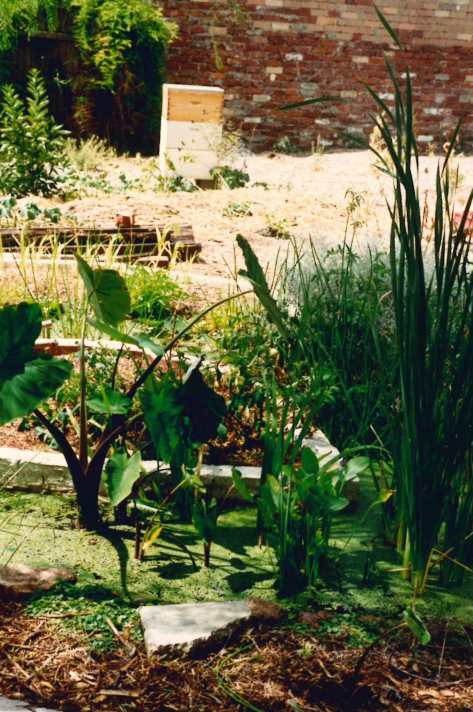 Permaculture house garden 1