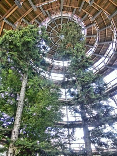 Canopy walk near the Lusen visitor center.
