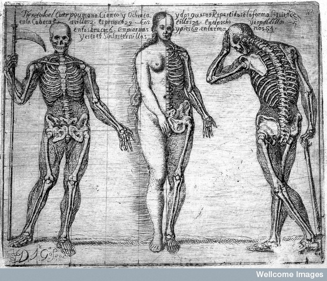 L0018985 Skeletons and a bisected woman; Jose Garcia Hidalgo