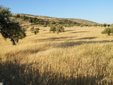 1280px-Fields_of_Yanoun_Palestine