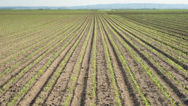 Feed monoculture
