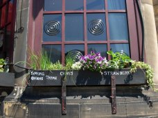 Flower tray at the Three Pigeons Inn, Halifax, Calderdale, West Yorkshire, England. Photo: digitalrob70 from England [CC BY 2.0 ], via Wikimedia Commons.