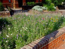 Wildflower meadow by the seating area in Lyndhurst Car Park, UK © Copyright Val Pollard [CC BY-SA 2.0], via Geograph.