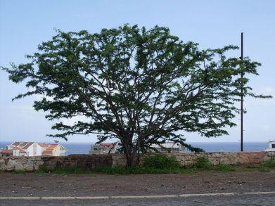 800px-acácia,_praia,_cape_verde