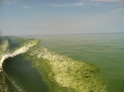Harmful algae bloom. Lake Erie. July 22, 2011. Credit: NOAA.