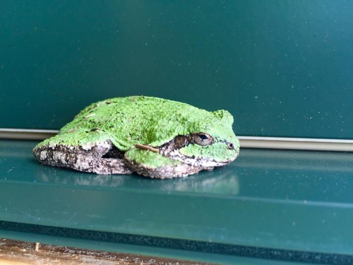 Neužil - Pic 2 - frog ©Mark Neužil